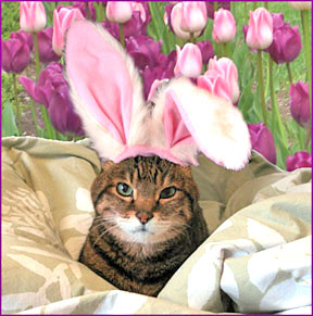 Easter Pet Poisons
