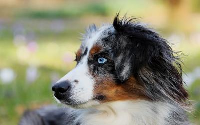 image for Deaf Dog Awareness Week